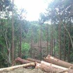 田舎に住みたい人にとって最適な「林業で副業(複業)」という選択肢