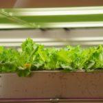 野菜やハーブを育てて月5万円。マイクログリーンは副業として将来有望